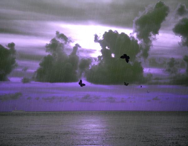 Sky Photograph - Butterfly Dreams And A Purple Sky by Rosalie Scanlon