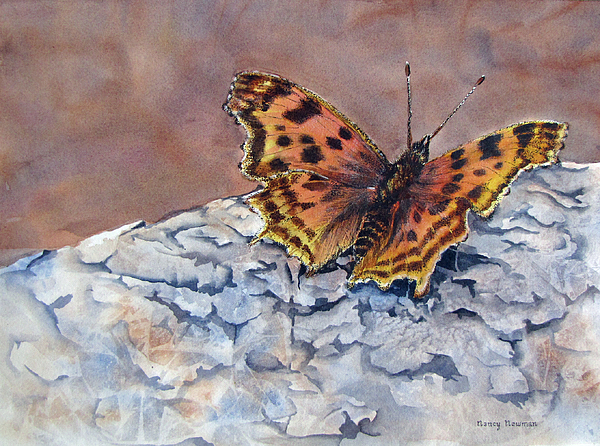 Butterfly Painting - Butterfly-in-the-old-growth-forest by Nancy Newman