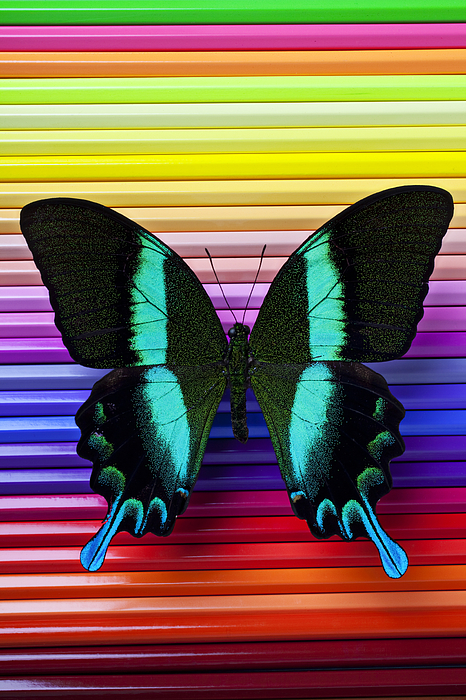 Butterflies Photograph - Butterfly On Colored Pencils by Garry Gay
