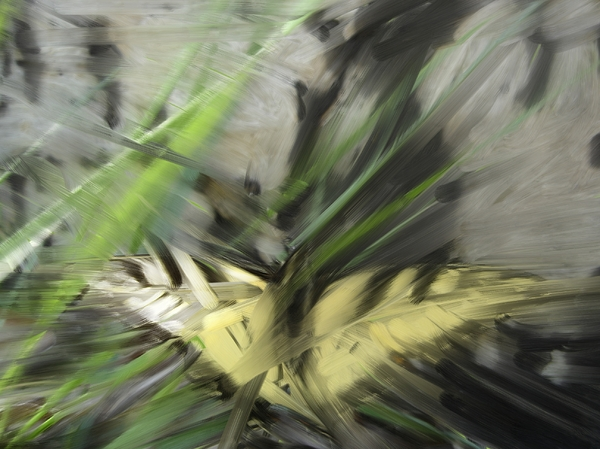 Butterfly Painting - Butterfly by Ryan Vaal