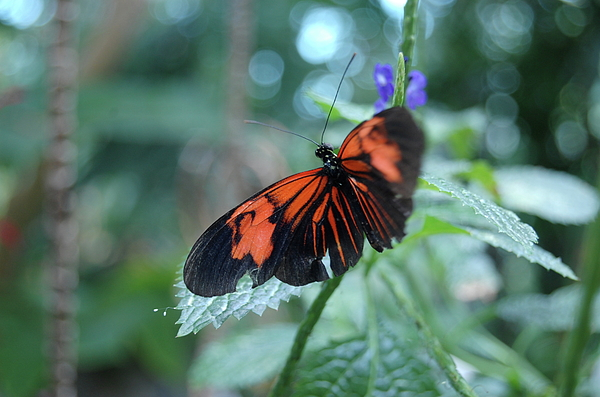 Monarch Butterfly Photograph - Butterfly by Samantha Kimble
