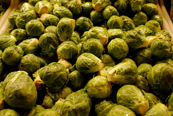Brussel Sprouts Photograph - Cabbage Family by Sonja Anderson