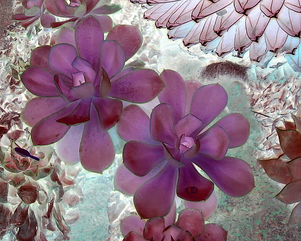 Mauve Photograph - Cactus In Mauve by Lance Young