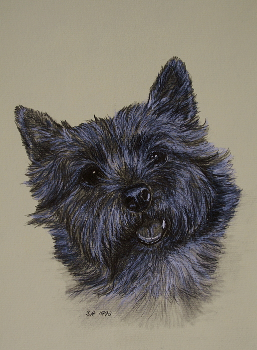 Cairn Drawing - Cairn Terrier by Susan Herber