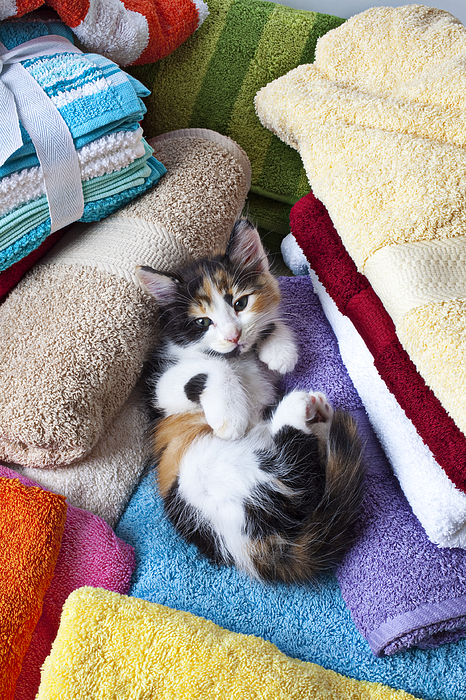 Cats Photograph - Calico Kitten On Towels by Garry Gay