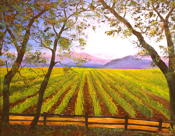 Hudson River School Painting - California Napa Valley Vineyard by Connie Tom