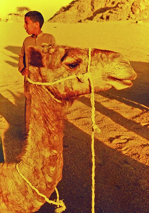 Egypt Photograph - Camel Ride by Elizabeth Hoskinson