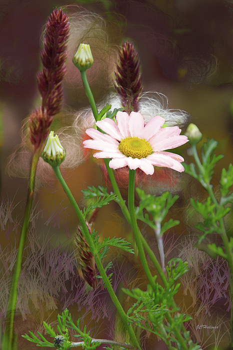 Flower Photograph - Camomile And Grass by Joe Halinar