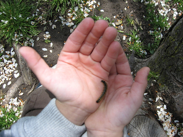 Hands Photograph - Can We Take It Home Mom by Shelia Howe