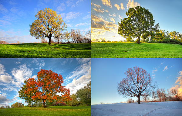 Canada Photograph - Canadian Seasons by Mircea Costina Photography