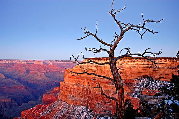 Arizona Photograph - Canyon Tree by Peter Tellone