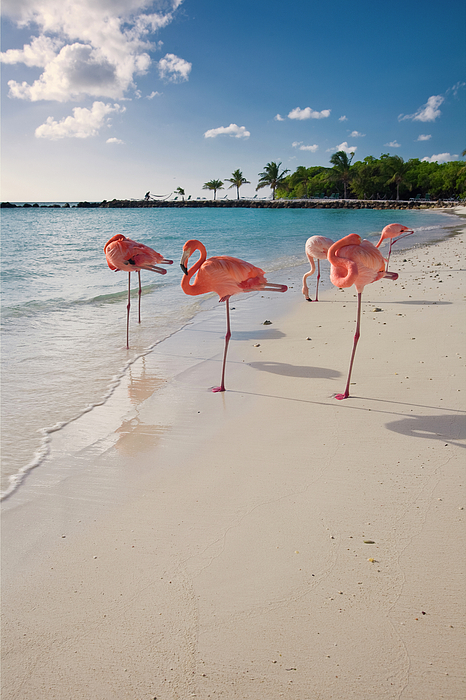 Beach Photograph - Caribbean Beach With Pink Flamingos by George Oze