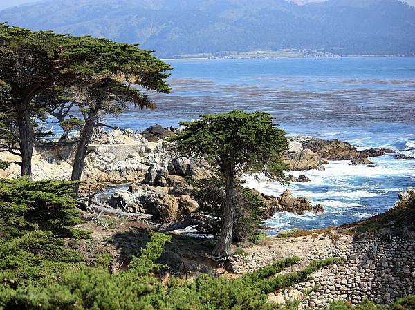 California Photograph - Carmel Seaside With Cypresses by Carol Groenen