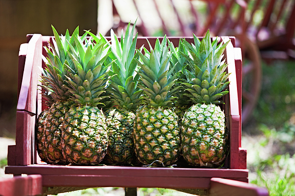 Pineapple Photograph - Cart Of Pineapples by Walt Stoneburner