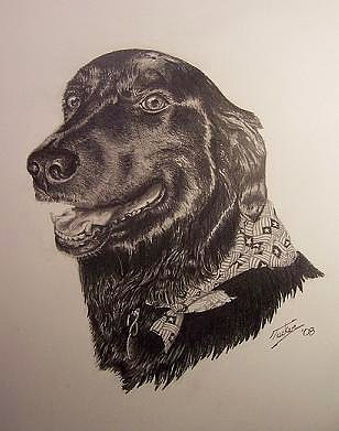 Dog Drawing - Cash by Andrew Tucker