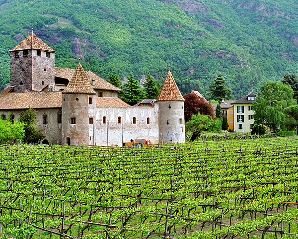 Castle Photograph - Castle And Vineyard In Italy by Greg Matchick
