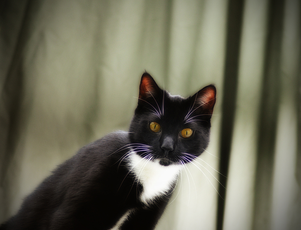Cat Photograph - Cat Cat by Bill Cannon