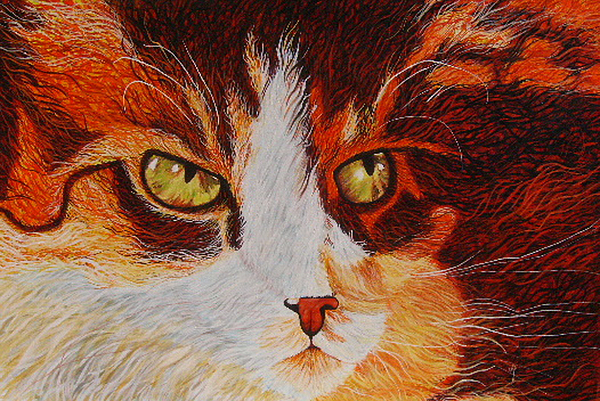 Animal Painting - Cat Eye by Shahid Muqaddim