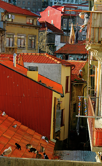 Porto Photograph - Cat Feed by Skip Hunt