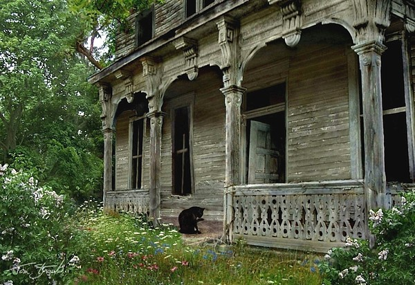 Haunted House Photograph - Cat House 2 by Tom Straub