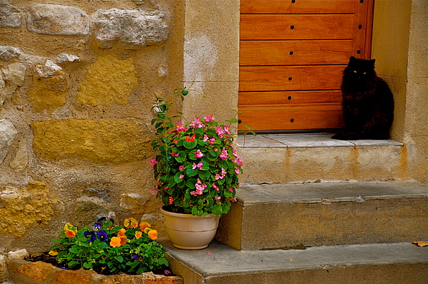 Cat In Capestang France Photograph by K C Lynch