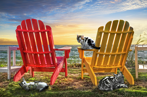 Clouds Photograph - Cat Nap At The Beach by Debra and Dave Vanderlaan