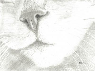 Closeup Digital Art - Cat Nose by Joshua Hullender
