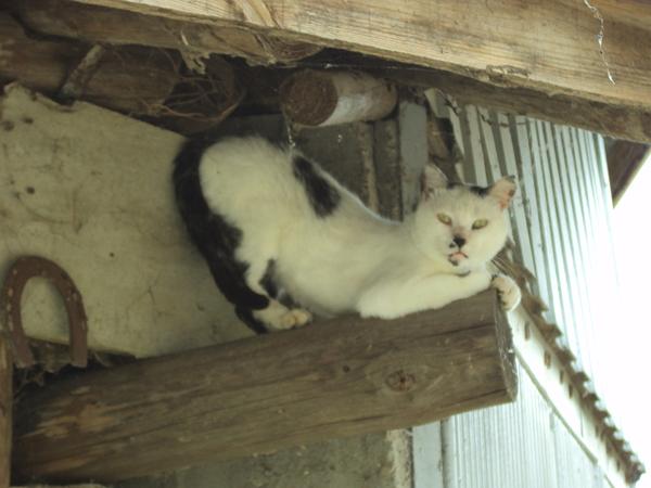Cat Photograph - Cat Possing by David Du Hempsey