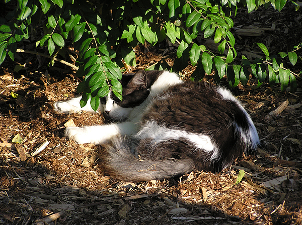 Cat Photograph - Cat Resting Under Tree by Richard Mitchell