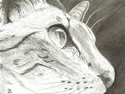 Cat Drawing - Cat Side Profile by Joshua Hullender
