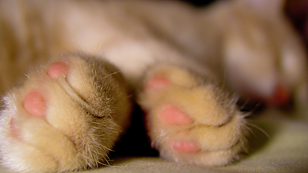 Cat Photograph - Catnap by Alfredo Cinco
