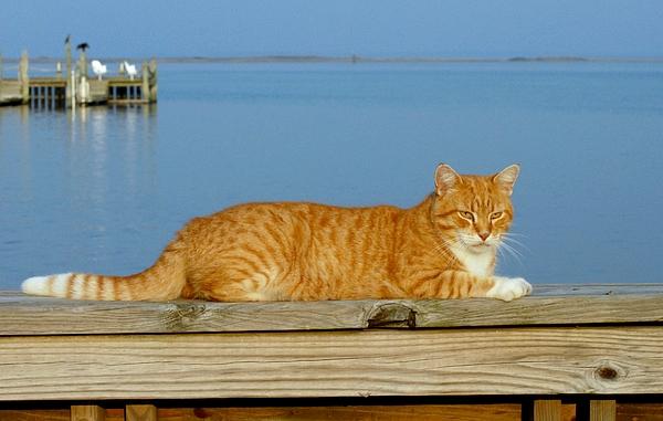 Cats Photograph - Cats 29 by Joyce StJames