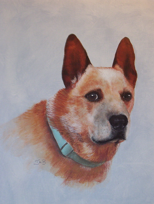 Pet Portrait Painting - Cattle Dog by Janice M Booth