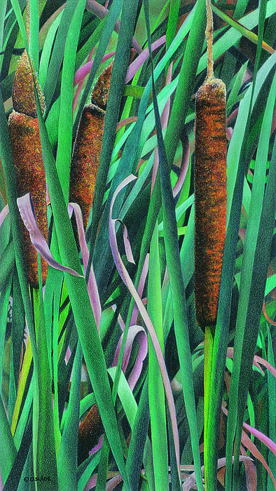 Cattails Drawing - Catwalking by Donna Slade