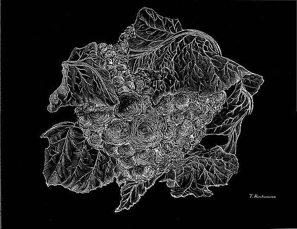 Graphic Painting - Cauliflower by Tatiana Rodionova