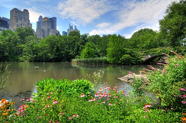 Central Park Photograph - Central Park by Kelly Wade