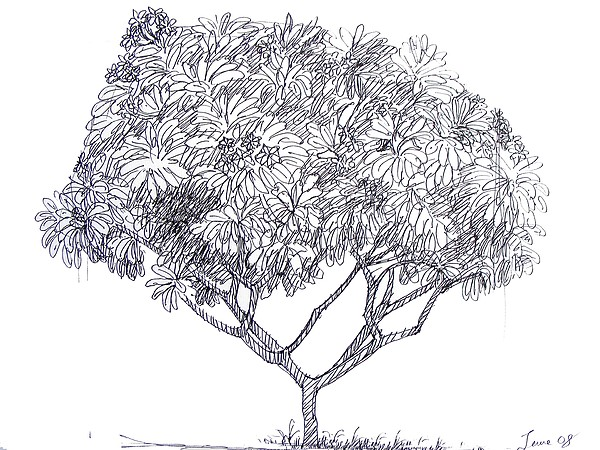 Landscape Drawing - Champa Tree by Naveen Wagh