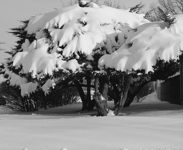 Landscape Photograph - Chance Of Snow by Nicholas J Mast