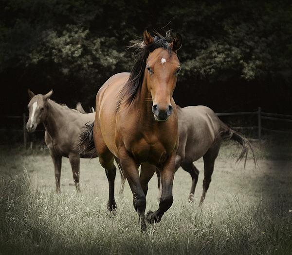 Quarter Horse Photograph - Charlie And Friends by Jana Goode