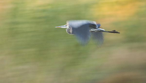 Nature Photograph - Check Me Out by Charlie Osborn