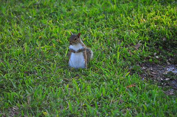 Squirrel Photograph - Cheese by Len Barber