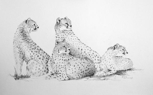 Cheetah Drawing - Cheetah Group by Alan Pickersgill
