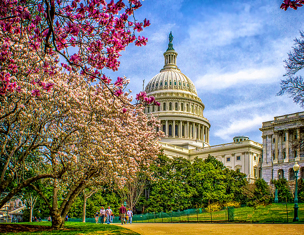 Cherry Photograph - Cherry Blossoms At The Capitol by Nick Zelinsky