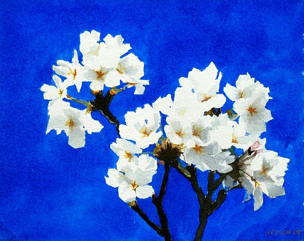 Cherry Painting - Cherry Blossoms by William  Nelson