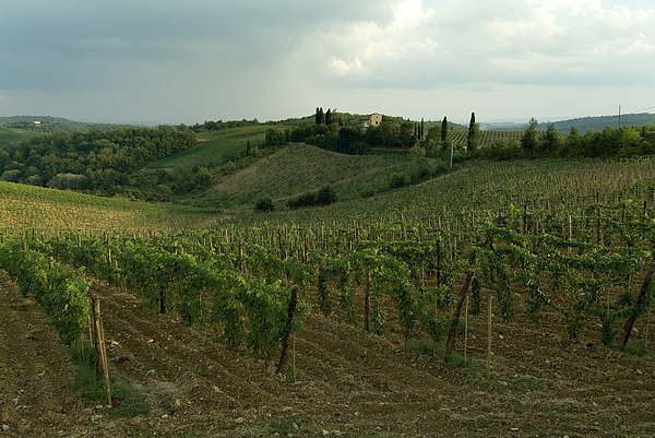 Chianti Photograph - Chianti Vineyards In Tuscany by Todd Gipstein