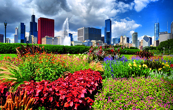 Chicago Photograph - Chicago N Flowers by Emily Stauring