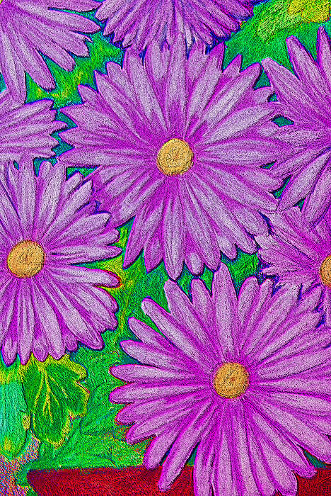 Coloured Pencil Mixed Media - Chrysanthemums Pink by Adrienne Talbot