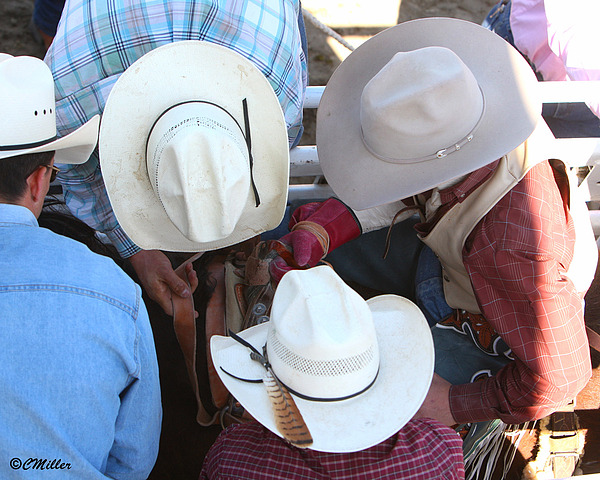 Rodeo Photograph - Chute Help.. by Carol Miller