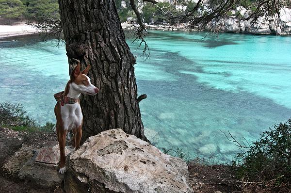 Dog Photograph - Cleopatra In A Turquoise Paradise by Pedro Cardona Llambias