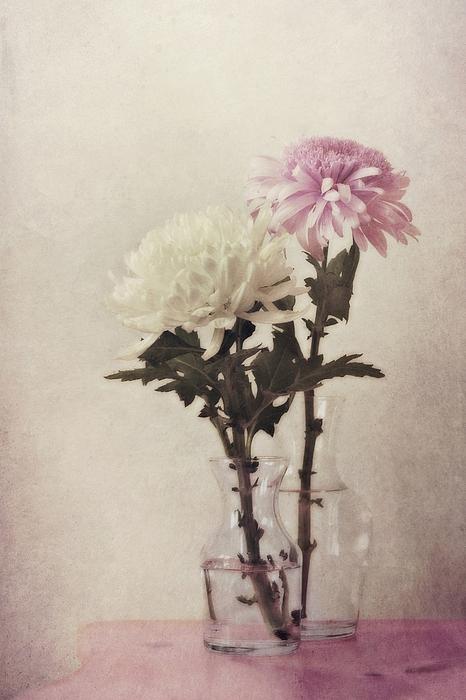 Daisy Photograph - Closely by Priska Wettstein